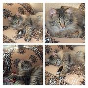 Взрослые кошки от ОО Твори Добро  !